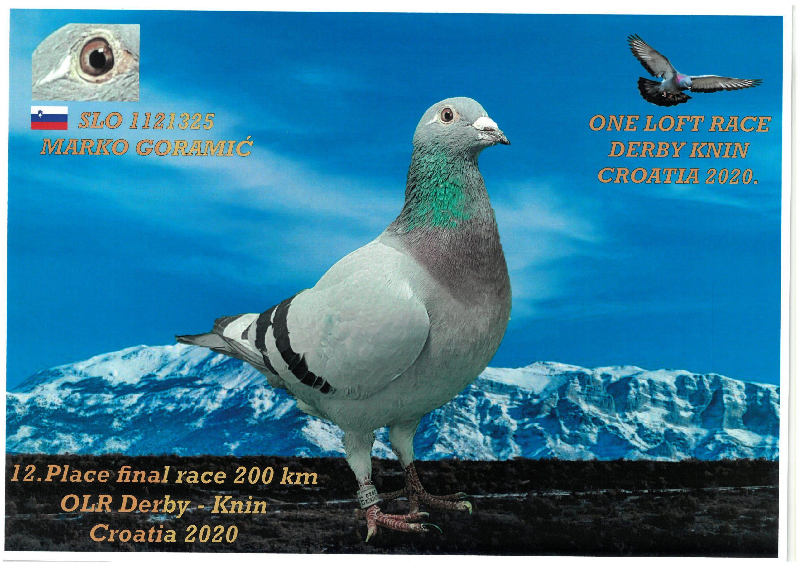 Derby-Knin 12